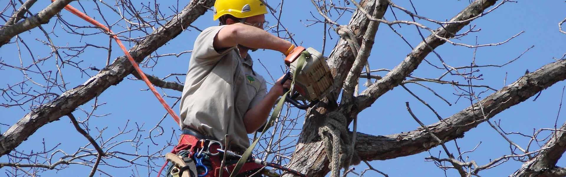 Tampa Tree Care Service Amp Maintenance Tampa Tree