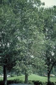 Loblolly Bay Panorama Tree Care